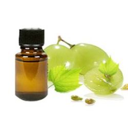 Essential Oil Division Grapeseed Oil 2 oil_grapeseed