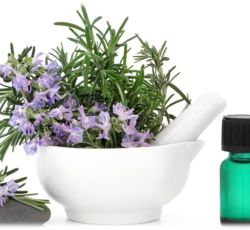 Essential Oil Division Rosemary Oil 2 oil_rosemary