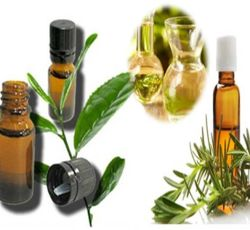 Essential Oil Division Tea Tree Oil 2 oil_tea_tree_new